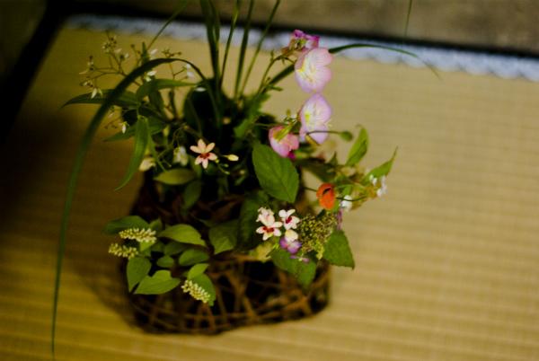 三溪園お茶会3
