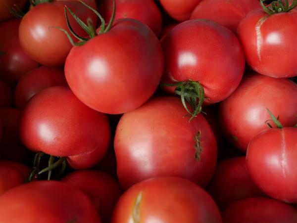 tomato_20150614_03