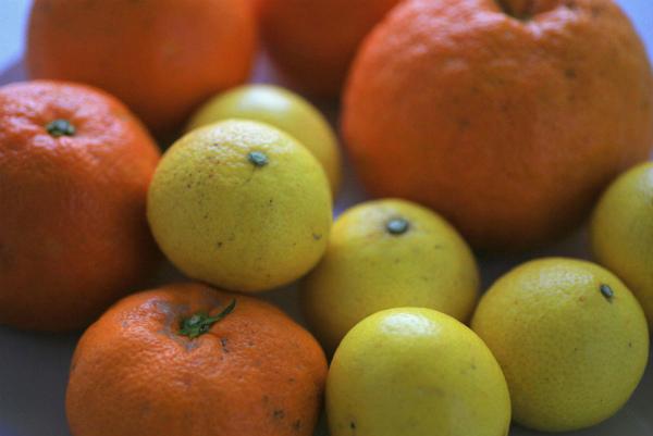 orange_20160314